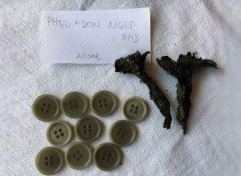 funghi-e-licheni-02